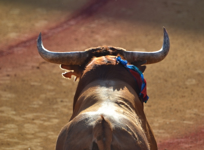 Experience bullfighting